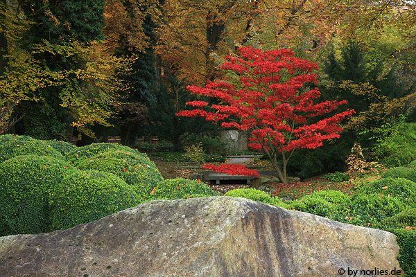 Amazing Japanischer Garten im Botanischen Garten Augsburg Germany Garten Inspiration Pinterest Botanischer garten augsburg Japanische und G rten
