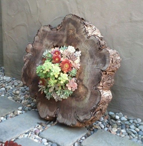 succulents in wood