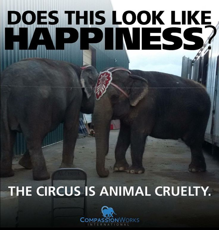 CompassionWorks Intl @CWIntl     The #CircusLivesOn animal abuse and misery. #BoycottTheCircus