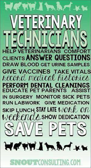 Vet Tech Quotes New 18 Best Vet Techs Images On Pinterest  Veterinary Medicine