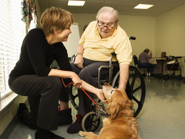 animal assisted therapy lit review Pet therapy isn't just fun and games a growing field, animal-assisted therapy has proven health benefits systematic literature review.