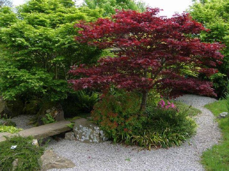 M s de 1000 ideas sobre rboles de sombra en pinterest for Arboles de sombra para jardin