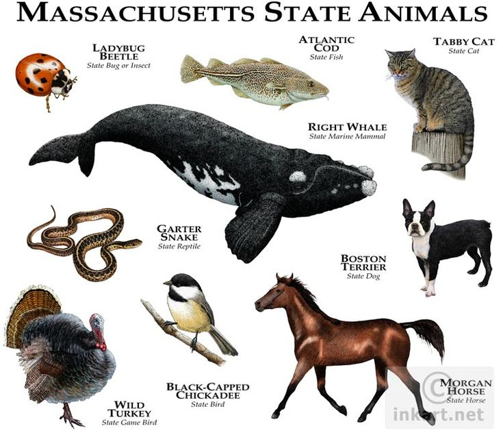 22 best images about us states massachusetts on for Mass fish and wildlife