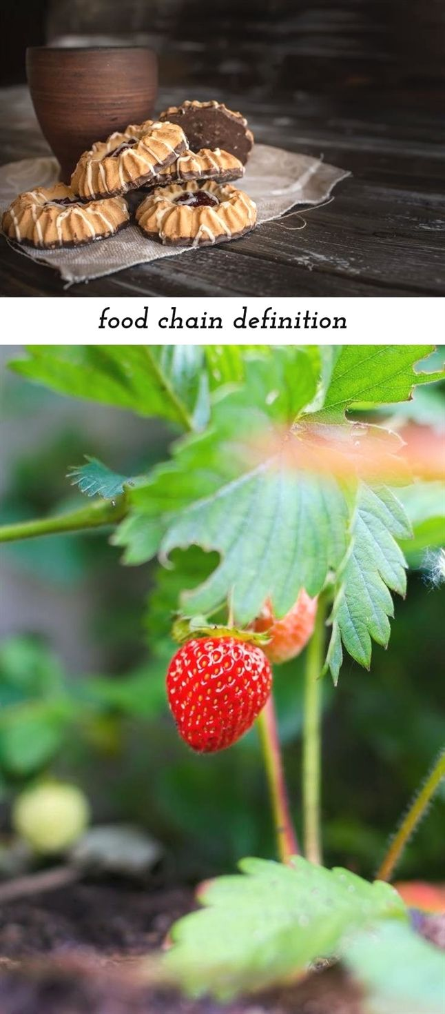 food chain definition_134_20180909081934_59 food baby