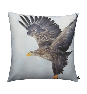 Eagle Photoprint in color 60x60cm