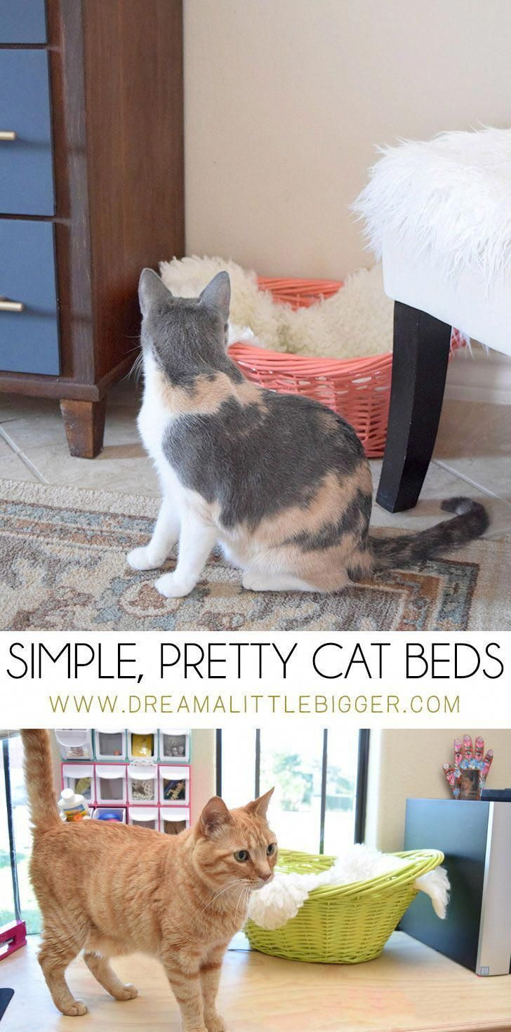 Simple Pretty Cat Beds For Lazy Days Crafts Cats Furniture