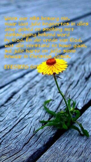 EFÉSIËRS 6:12 Want ons worstelstryd is nie teen vlees en bloed nie, maar teen die owerhede, teen die magte, teen die wêreldheersers van die duisternis van hierdie eeu, teen die bose geeste in die lug.