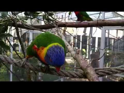 Lorikeets, macaw and other birds at campus Barneveld -  #bird #birds  #birding #animale #bird_watchers_daily #animal #birdwatching #pets #nature_seekers #birdlovers Birds at the campus of Groenhorst Barneveld, vocational college for animal husbandry, zookeeping, agriculture and veterinary care. Species in this clip: white stork, ducks, red-breasted... - #Birds