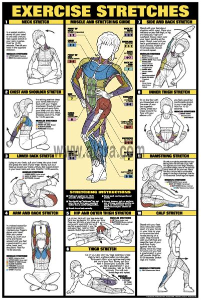 Exercise Stretches Poster | by Bruce Algra