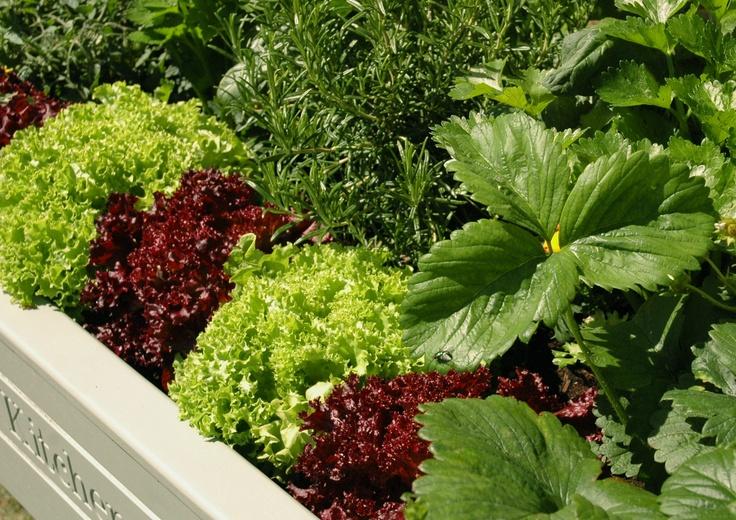 raised planter garden living raised gardens salads veggies planting to