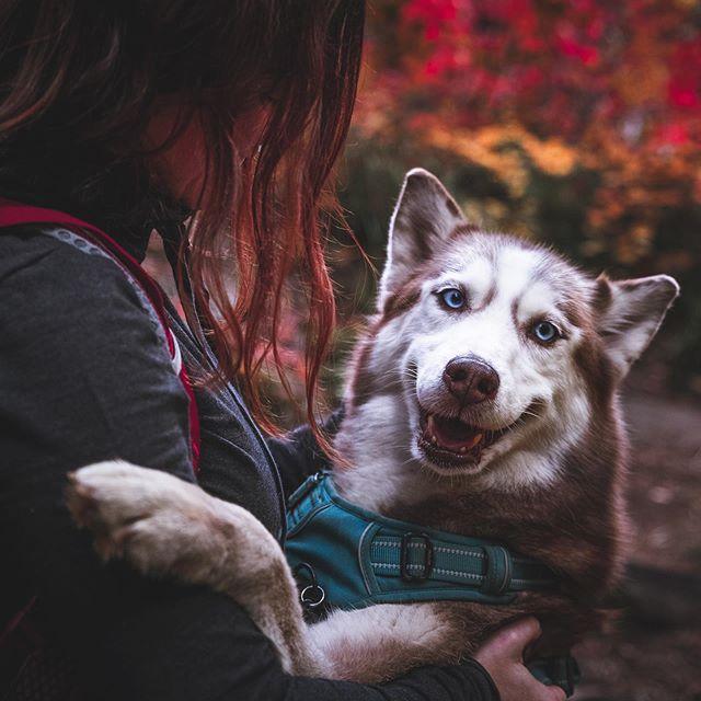 Look At This Happy Husky Face Siberian Husky Dog Husky