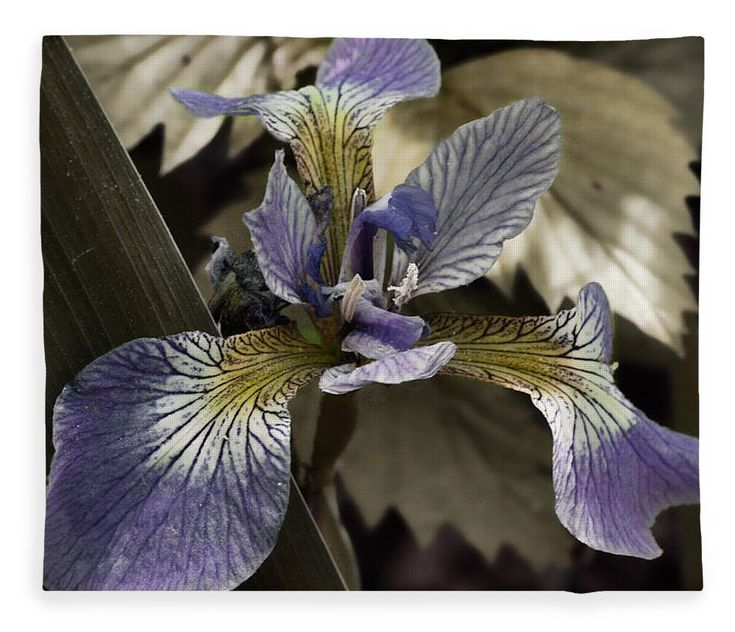 Flowers & Plants Fleece Blanket featuring the photograph Wild Blue Iris by Jeff Folger