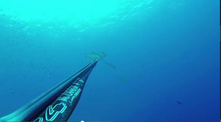 Video Pesca in Apnea: Ricciola 2 Kg all'aspetto (Isola d'Elba). #spearfishing #videopescainapnea #videopescasub #ricciola #amberjack