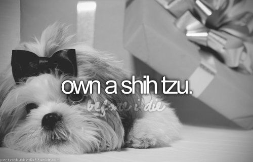 "i'm not a fan of the word ""own"", but we do have a shih tzu in our immediate family :): Bucketlist, Baby Bentley, Life, Buckets, Before I Die, Cute Dogs, Bucket Lists, Check 3Cici 3"