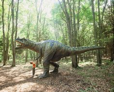 Travel | Connecticut | Only In Connecticut | Explore Connecticut | Dinosaur Park | Attractions | Outdoors | Things To Do | Museum | Park | Places To Visit