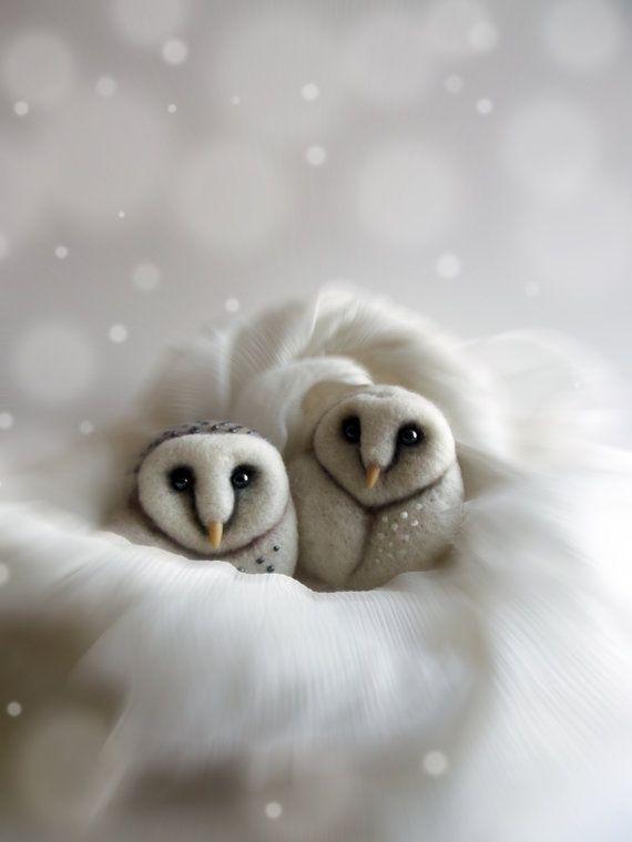 The 25 Best Baby Barn Owl Ideas On Pinterest Beautiful