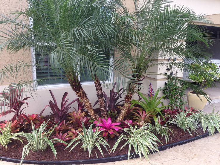 332 best images about jardines con bromelias y orquideas for Landscaping rocks fort myers fl