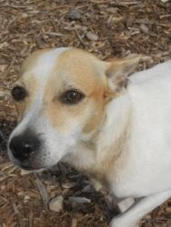 OHIO ~ URG'T ~ meet Ricky an #adoptable #JackRussellTerrier #dog in Fremont. The 98.00 dollar #Adoption fee includes, Spay or Neuter, first shots and a 1 year rabies tag. The 2012 license is included ~~ Sandusky County Dog Shelter   1950 Countryside Place.   Fremont, OH 43420    Phone: 419-334-2372 &/OR glass_john@co.sandusky.oh.us      Open 8am to 4:30pm Monday through Friday.    Open 8am to 12pm on Saturdays -pin 1/1/2