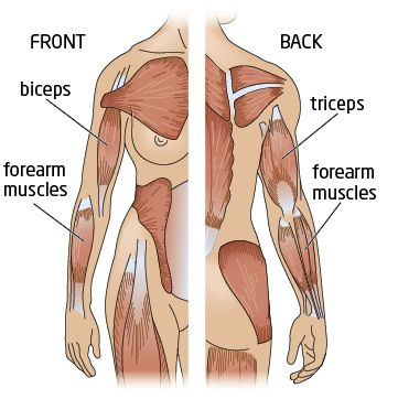 51 besten [Wed]Arms(Shoulders,Triceps,Biceps) Bilder auf Pinterest ...