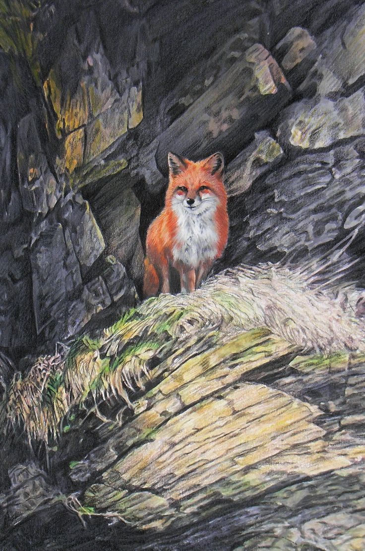 Red Fox in the Galloway Hills