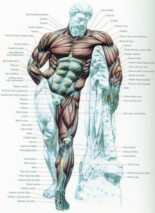 Mapa dos Músculos