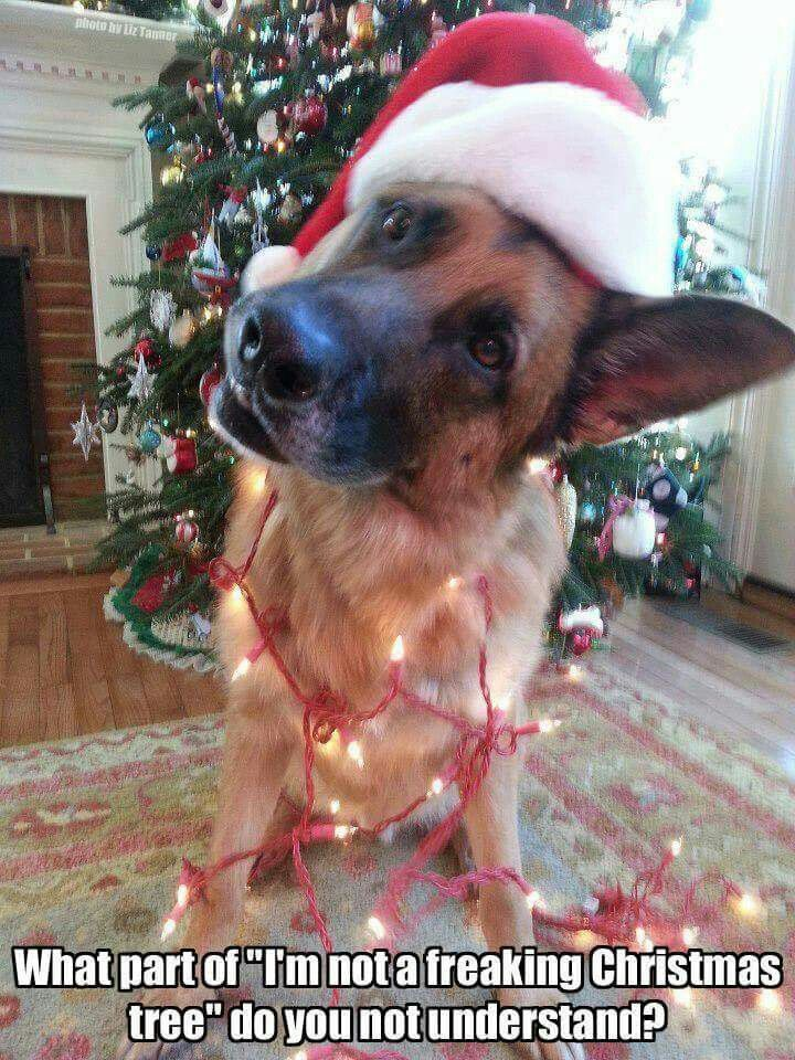 958c896f17bf3473e4cff4564d2a4e45 fitspo the keys 245 best christmas with critters images on pinterest doggies