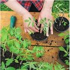 Top Ten Tips for Eco-Friendly Gardening : Outdoors : Home & Garden Television