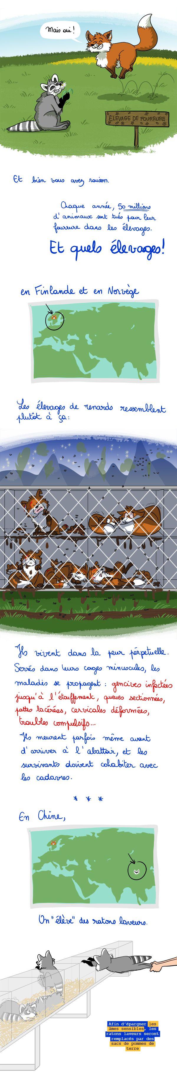 Honte d'être humain. Lutte contre les élevages pour la fourrure.
