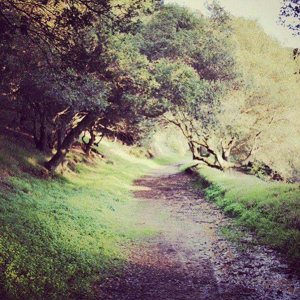 Secret pathway | @designconundrum