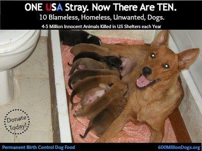 Best Stray Dogs USA Images On Pinterest Animal Rescue Dogs - Stray animals in the us map