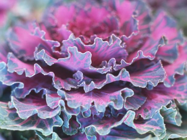 Looking to add color to your winter landscape? HGTV Gardens shares hardy flowers and plants that flourish when the temperatures drop.