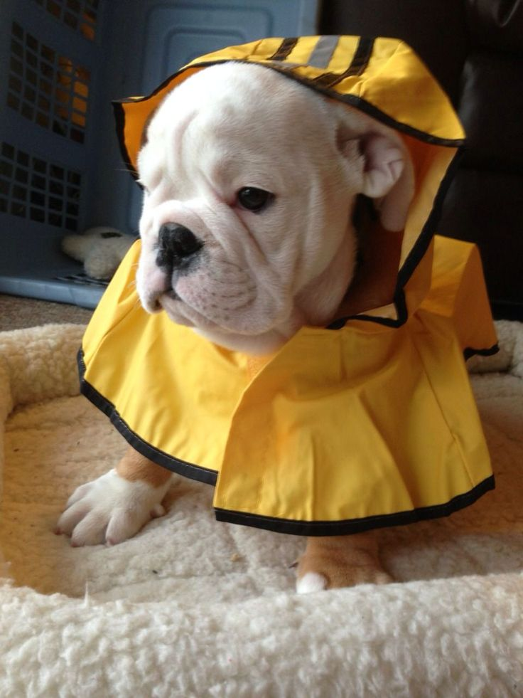 Best Dogs Images On Pinterest Adorable Animals Adorable - Dogs looking funny with toys