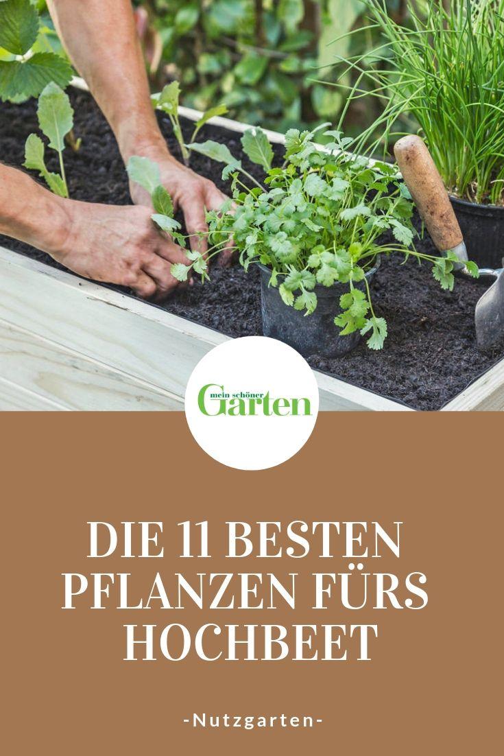 Die 11 besten Pflanzen fürs Hochbeet