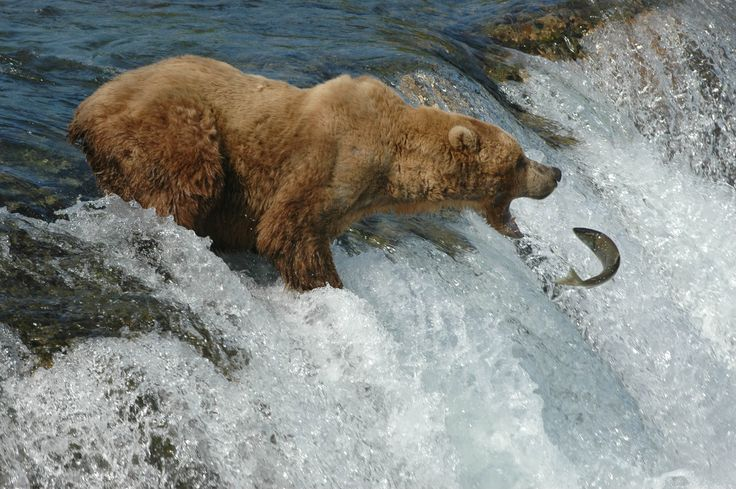 Alaska the last frontier........don't wait til your too old to enjoy all it has to offer......