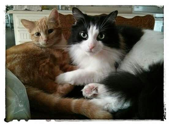 Lulu & Jacobi