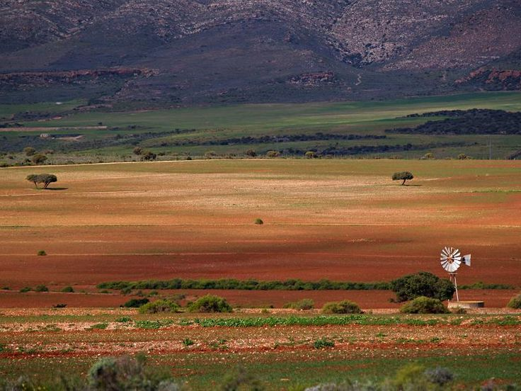 Karoo South Africa.  For hundreds of years, shearing seasons have come and gone in the Karoo, with wool and mohair products the result.