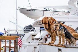 Kutyák, Hajók, Kutya, Csónakázás