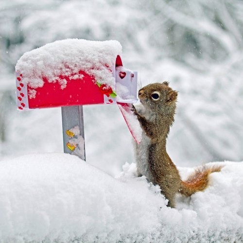 You Gat a Mail!: You'Ve Got Mail, Animals, Valentines, Squirrels, Winter Wonderland, Funny, Christmas Card