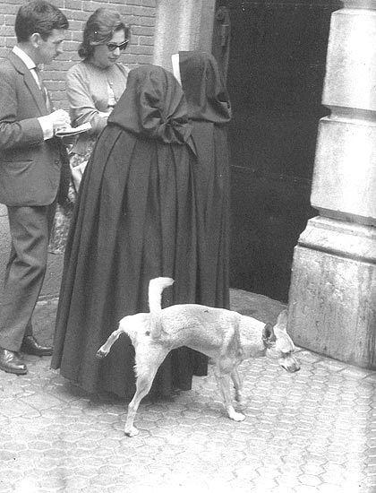 dog peeing on nun