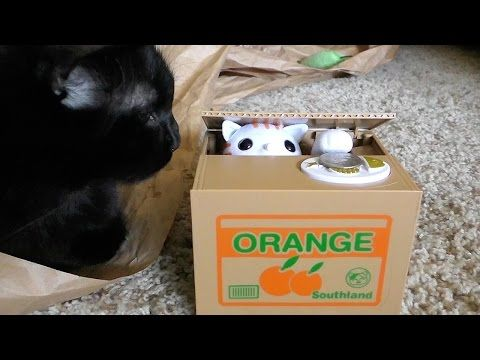 Cats React To A Japanese Cat Piggy Bank, Hilarity Ensues | Incredible Things