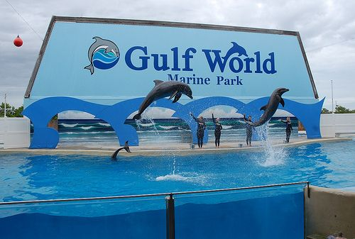 one of the best marine shows i've ever seen!! (gulf world in panama city beach, florida) .... hmmm I'll have to disagree that would be Indianapolis Zoo for the dolphin show BUT I do love Gulf World and the pictures you can have taken with the dolphins :)