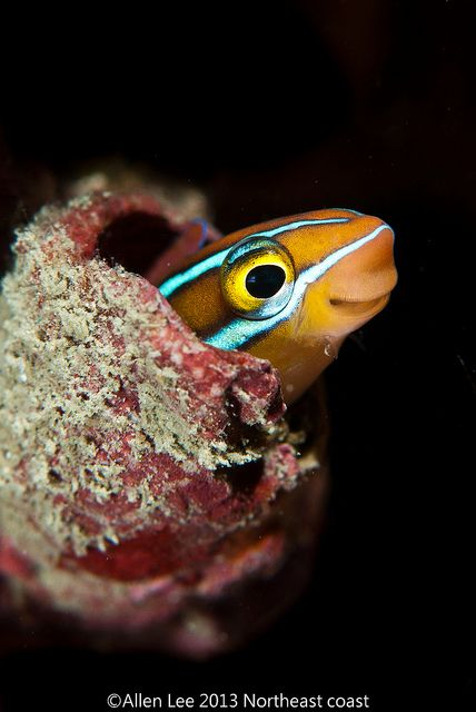 976 best marine fish and inverts images on pinterest for Fish under the sea