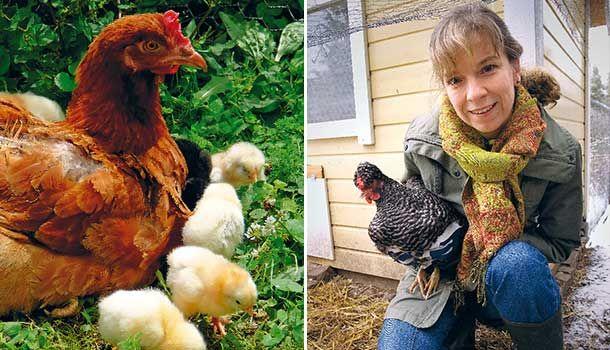 Med höns på tomten har du gratis underhållning och dessutom lyxen med egna gyllengula ägg. Anette Sievers hade länge drömt om att ha pickande vänner i trädgården innan hon slog till och skaffade sig en flock blandrashöns.