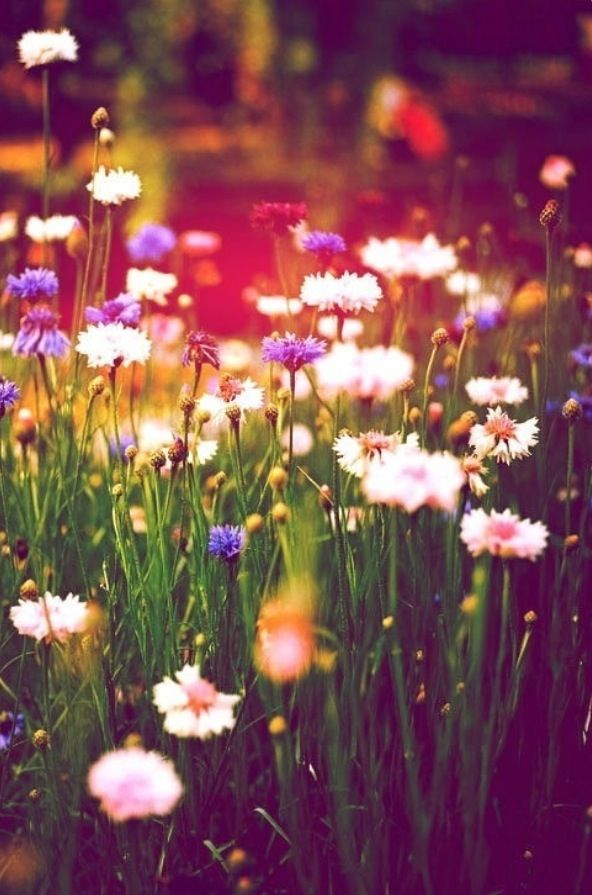 Daisy daisies meadow photography craft ideas inspiration handmade – craft-seller.com