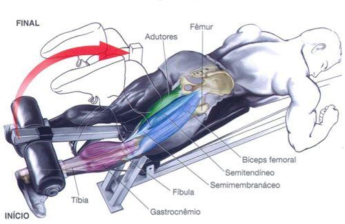 Flexão da perna (deitado) - O que trabalhar: Se os dedos dos pés estiverem a apontar para a frente (A), todos os três músculos posteriores da coxa. Caso os dedos estiverem a apontar para dentro (B), o foco estará nos músculos posteriores internos da coxa. Se os dedos estiverem a apontar para fora (C), o foco estará na parte externa dos músculos posteriores da coxa (bíceps femoral).