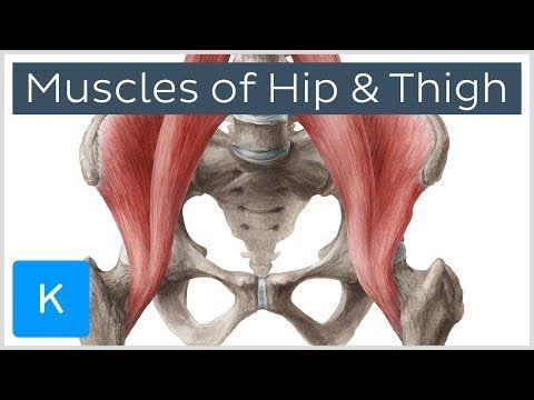 14 best Anatomy images on Pinterest   Human anatomy, Human body ...