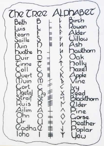 Tree alphabet - Ogham Irish tree name: Letter associated with tree: Tree ogham symbol: runic symbol: English tree name