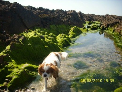 Angus at Carne Beach, Belmullet, County Mayo,Republic of  Ireland