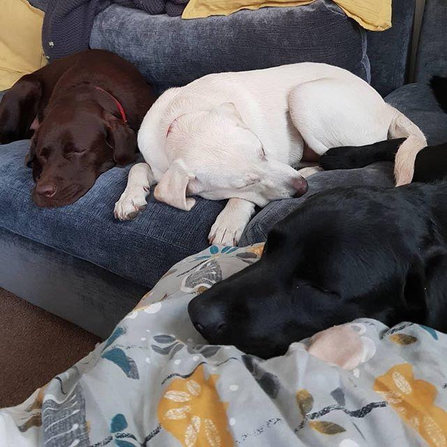 𝓟𝓲𝓷𝓽𝓮𝓻𝓮𝓼𝓽: KAYLIISIS ✨   – doggos & puppers