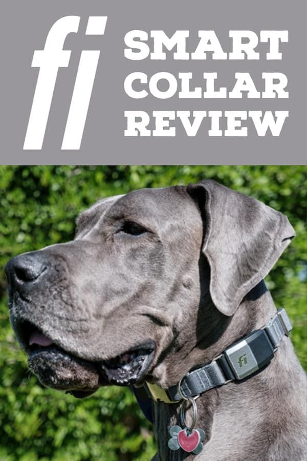 Are You Thinking About Getting A Dog Gps Collar The Fi Collar Has